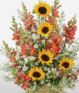 Sunflower Surprise-Mixed,Orange,White,Yellow,Mixed Flower,SunFlower,Arrangement
