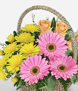 Magic Morning-Mixed,Peach,Pink,Yellow,Chrysanthemum,Daisy,Gerbera,Mixed Flower,Rose,Arrangement,Basket