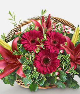 Just Because-Red,Daisy,Gerbera,Lily,Arrangement,Basket