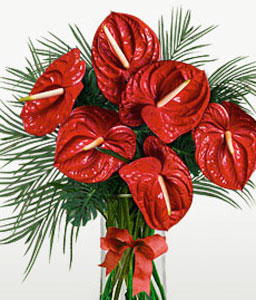 Anthurium Adventure-Red,Anthuriums,Arrangement