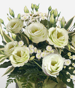 Pearly Whites-White,Rose,Arrangement