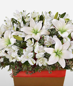 Lilium Lace-White,Lily,Arrangement