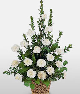 Loving Remembrance-White,Carnation,Sympathy