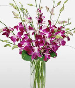 Magnificent Orchids-Lavender,Pink,Purple,Orchid,Arrangement