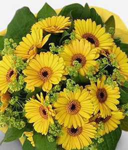 Sunblaze-Yellow,Daisy,Gerbera,Bouquet