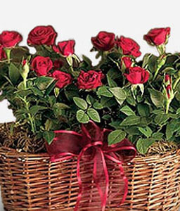 Edens Garden-Green,Red,Rose,Arrangement,Basket