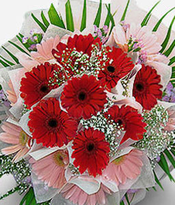 Thinking Of You-Green,Pink,Red,Daisy,Gerbera,Bouquet