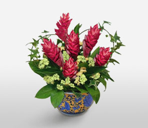 Kampong Glamour-Pink,Mixed Flower,Arrangement