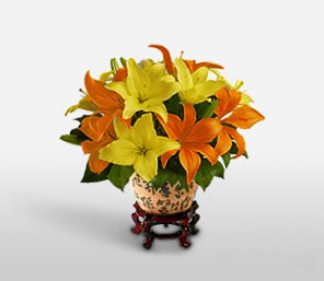Orange Opulence-Orange,Yellow,Lily,Arrangement