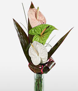 3 Musketeers-Green,Mixed,Peach,White,Anthuriums,Arrangement