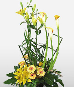 Artful Delights-Green,Yellow,Gerbera,Lily,Arrangement