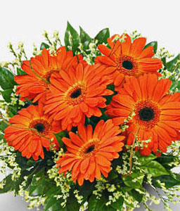 Orange Crush-Orange,Gerbera,Arrangement