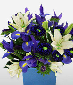Boy O Boy-Blue,White,Chrysanthemum,Lily,Arrangement