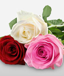 Rose Splendor - 3 Mix Colored Rose Bouquet