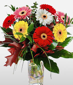 Gdynia Glory-Pink,Red,Yellow,Daisy,Gerbera,Bouquet