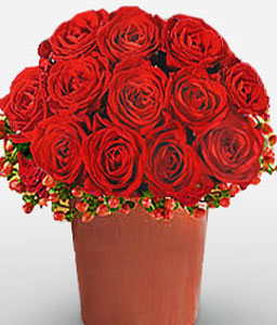 Durban Desire-Red,Rose,Arrangement