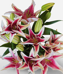 Starry Night-Pink,White,Lily,Bouquet