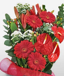 Red Flame-Red,Anthuriums,Gerbera,Mixed Flower,Arrangement