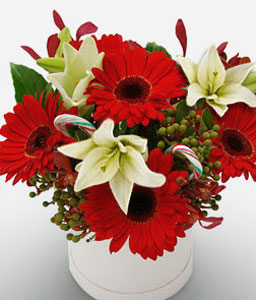 Classic Posy Box - Gerbera & Lilies-Red,White,Gerbera,Daisy,Lily,Arrangement