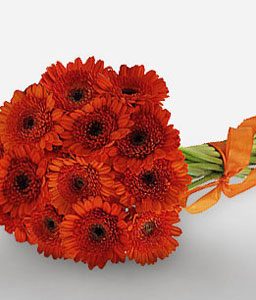 Red Delight Daisies-Red,Daisy,Gerbera,Bouquet