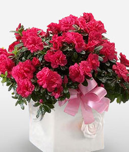 Cherry Glow-Red,Mixed Flower,Arrangement,Basket,Plant