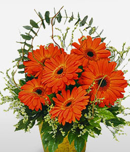 Majestic Gerberas-Green,Orange,Daisy,Gerbera,Arrangement