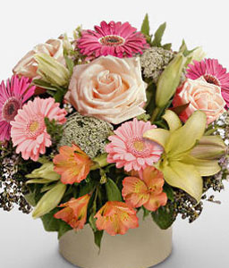 Cosmo-Mixed,Pink,Alstroemeria,Gerbera,Lily,Mixed Flower,Rose,Arrangement