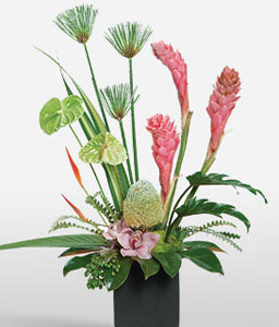 Hawaain Fantasy-Green,Mixed,Pink,Anthuriums,Mixed Flower,Orchid,Arrangement,Plant