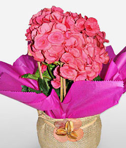 Beaute Sans Age-Pink,Mixed Flower,Arrangement
