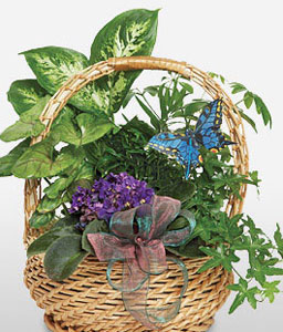 Butterfly Basket-Green,Plant
