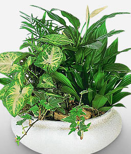 Assorted Plants-Plant