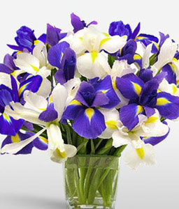 Ocean View-Blue,Mixed,White,Iris,Arrangement
