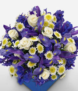 Baby Boy Blue-Blue,Mixed,Yellow,Daisy,Iris,Mixed Flower,Arrangement