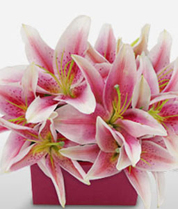 Pink Fairy - Asiatic Lilies-Pink,Lily,Arrangement