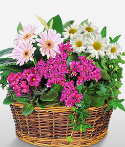 Modern Assortment-Mixed,Mixed Flower,Arrangement,Basket,Plant