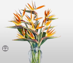 Fashion Couture-Orange,Birds of Paradise,Arrangement