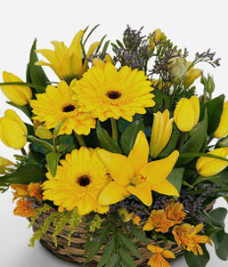 Myrtos Dazzle-Green,Yellow,Gerbera,Lily,Arrangement,Basket