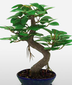Oriental Bonsai-Green,Plant
