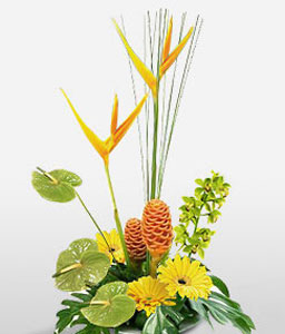 Modern Classic-Orange,Yellow,Birds of Paradise,Daisy,Gerbera,Arrangement