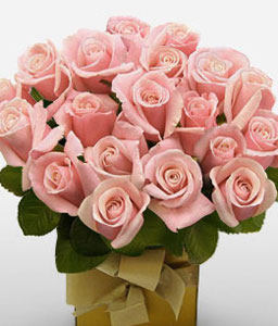 Pink Rosetta-Peach,Rose,Arrangement