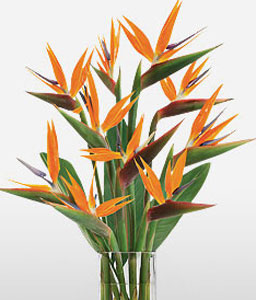 Paradise Perfection-Orange,Birds of Paradise,Arrangement