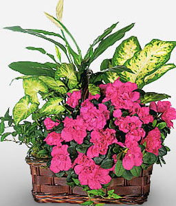 Natural Brilliance-Green,Pink,Mixed Flower,Arrangement,Basket,Plant