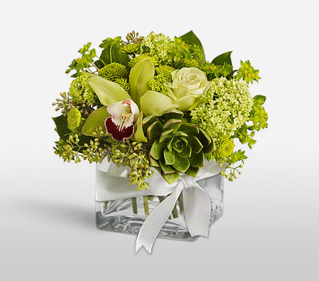 Green Fiesta <Br><Font Color=Red>Complimentary Vase </Font>