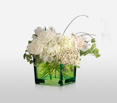 Sheer Elegance <Br><Font Color=Red>Complimentary Green Cube </Font><Br>