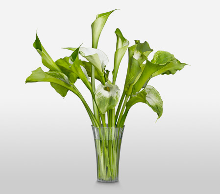 Verdant <br><font color=red>Complimentary Clear Vase</font>