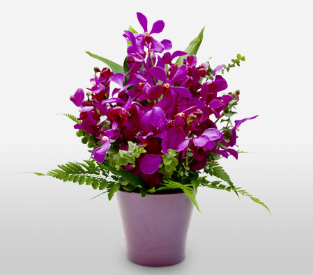Premium Orchids-Green,Lavender,Purple,Violet,Orchid,Arrangement