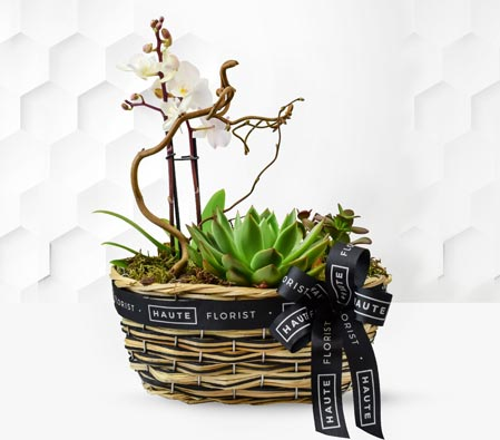Orchid and Succulents Plant