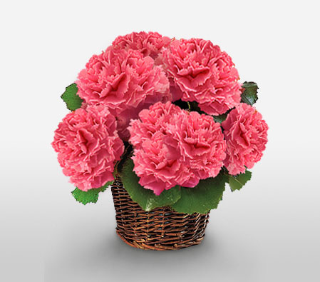 Superwomen Surprise-Pink,Carnation,Arrangement,Basket