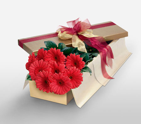Adored - Red Gerberas-Red,Gerbera,Arrangement
