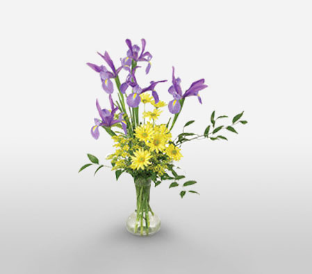 Lilac Love-Mixed,Purple,Yellow,Daisy,Iris,Mixed Flower,Arrangement
